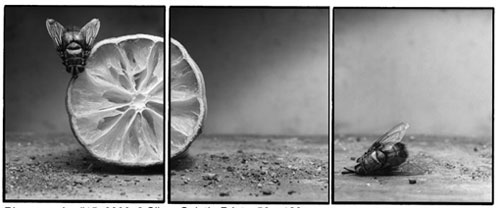 Joachim-Froese-Rhopography-15.jpg