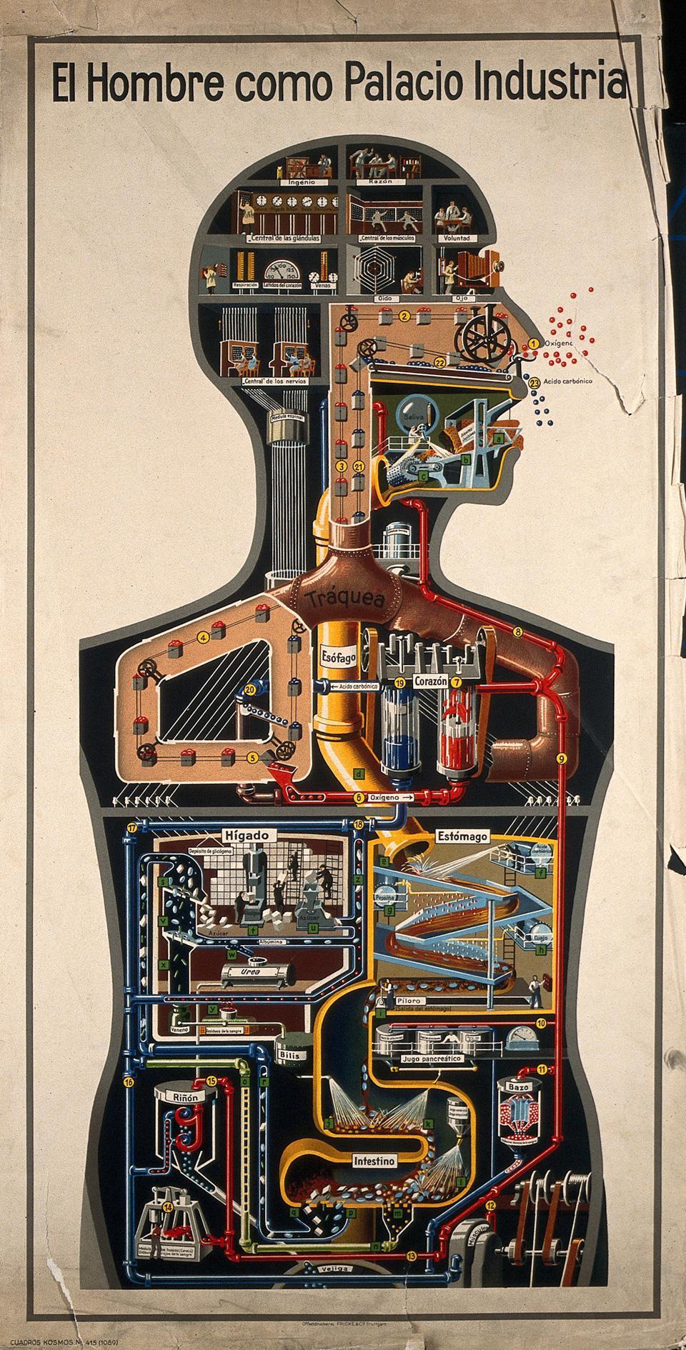 El hombre como palacio industrial -Fritz Kahn, 1930
