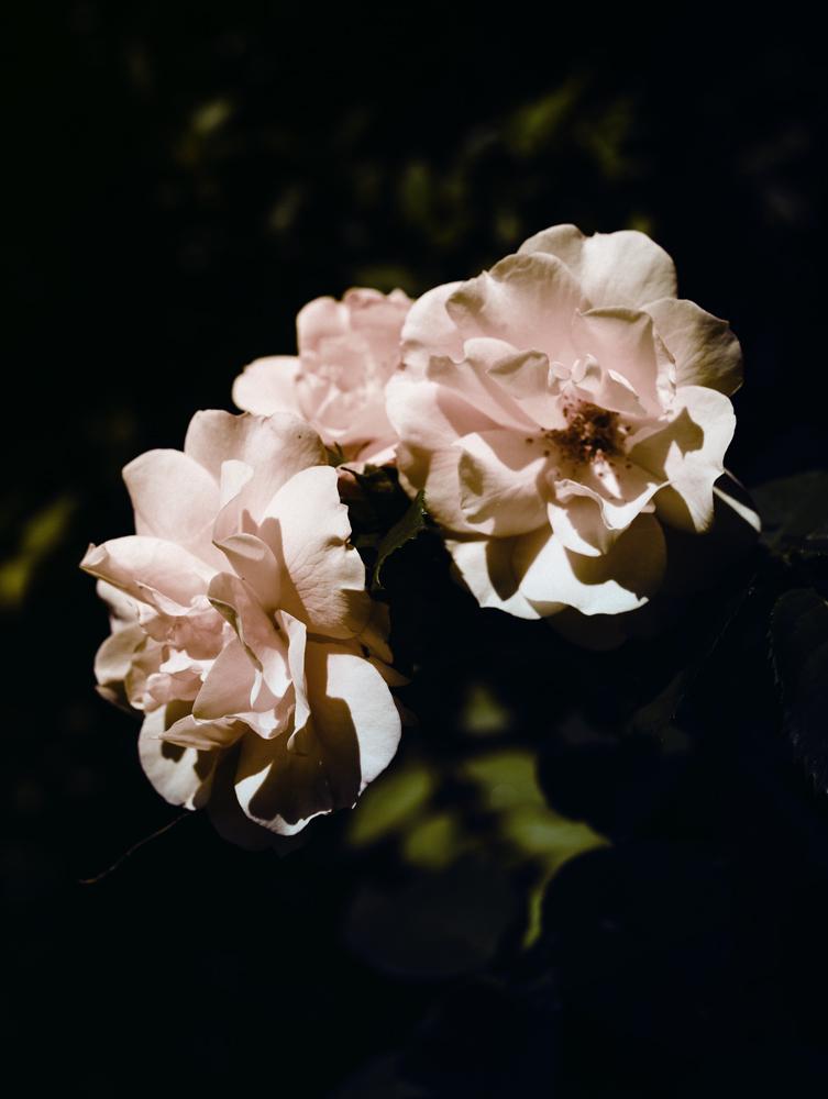 Still Life /Flowers , Flowers