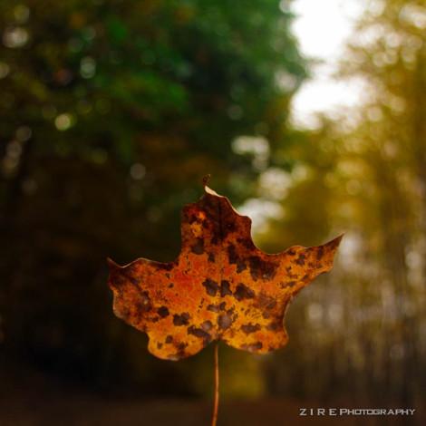 Hue Leaf