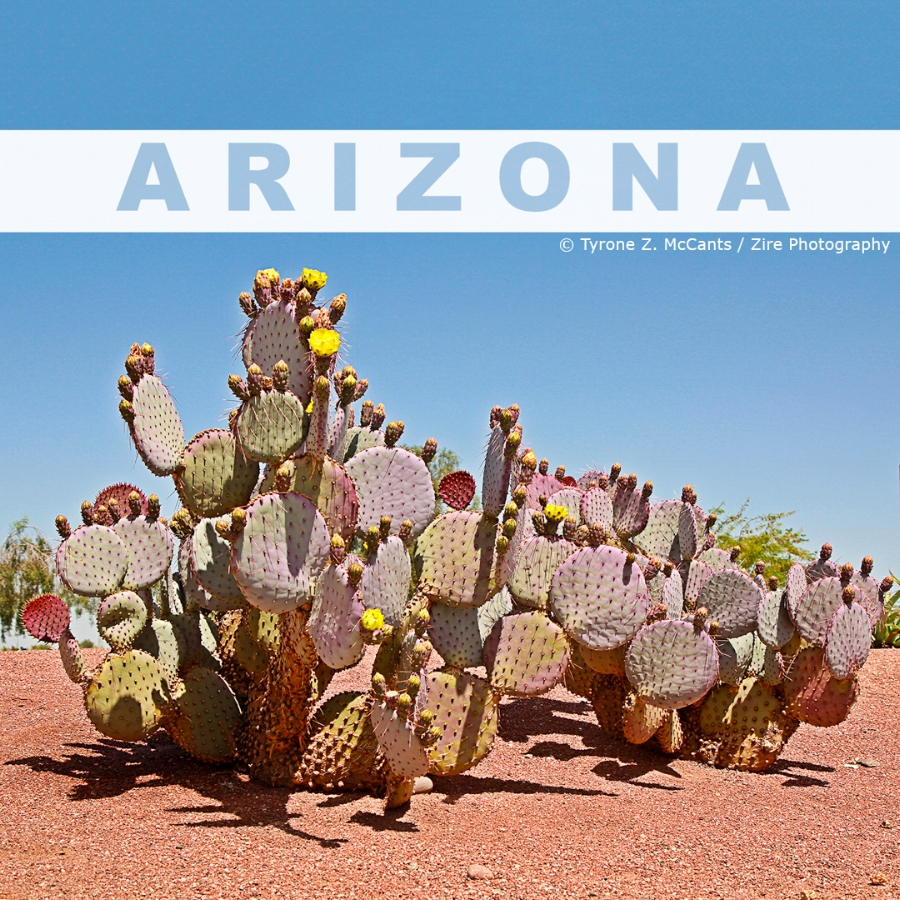 AZ Cactus