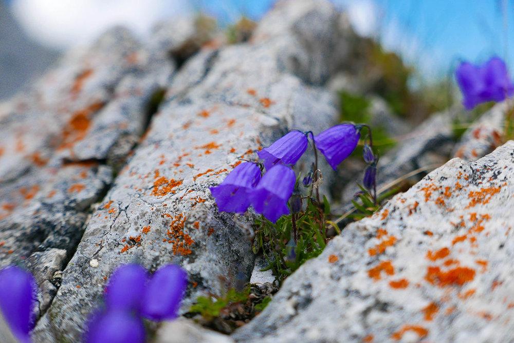 Innsbruck-1030327.jpg