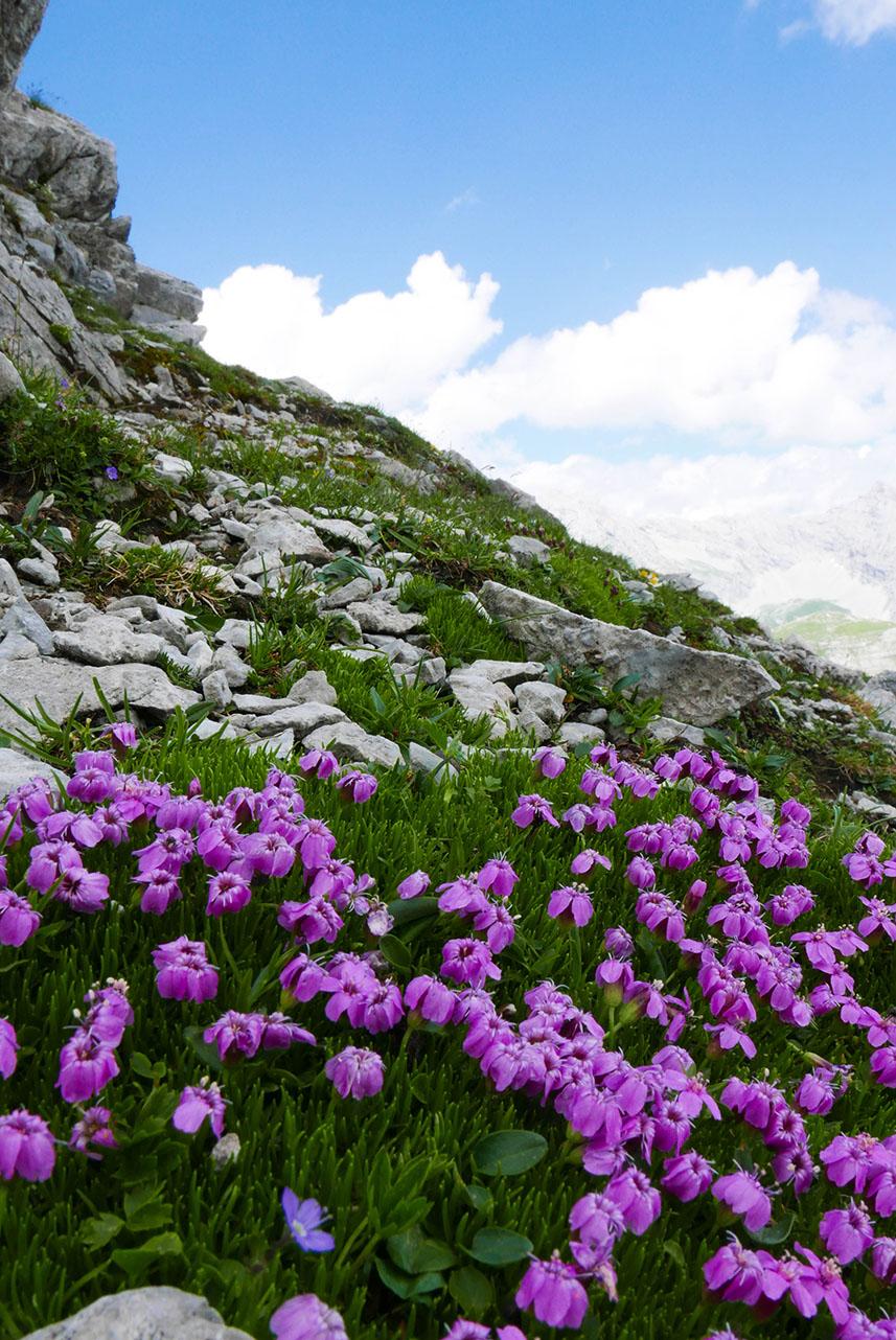 Innsbruck-1030397.jpg