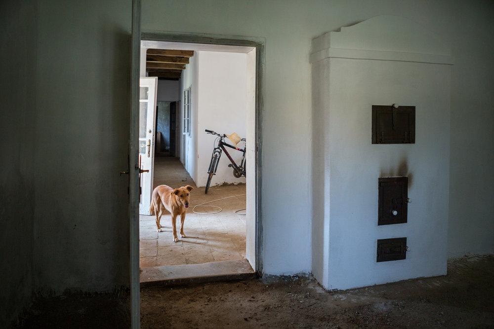 Az ingatlanokat potom pénzért, borzasztó állapotban vásárolták. A kemencét már Jocek rakta, Zsuzsi kutya vigyázó tekintete mellett.