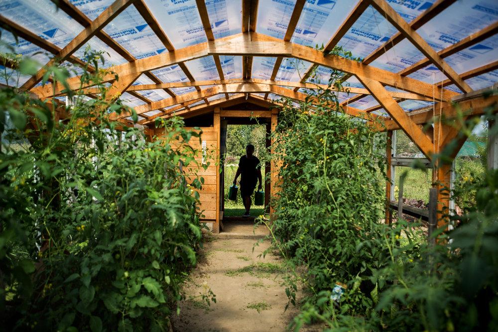 """""""El kell ültetni a növényt, és nem kell bántani"""". Ez persze rengeteg öntözést, kapálást, gazolást jelent, hiszen ha nyáron csak pár napig magára hagyják a kertet, túlnő rajtuk a gaz."""