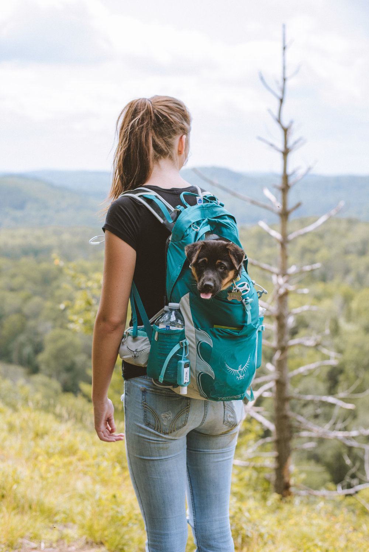 Luna's first hike at Opeongo Lake