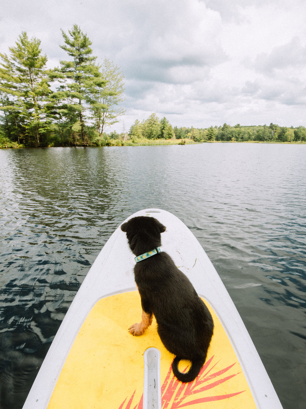 First paddle board