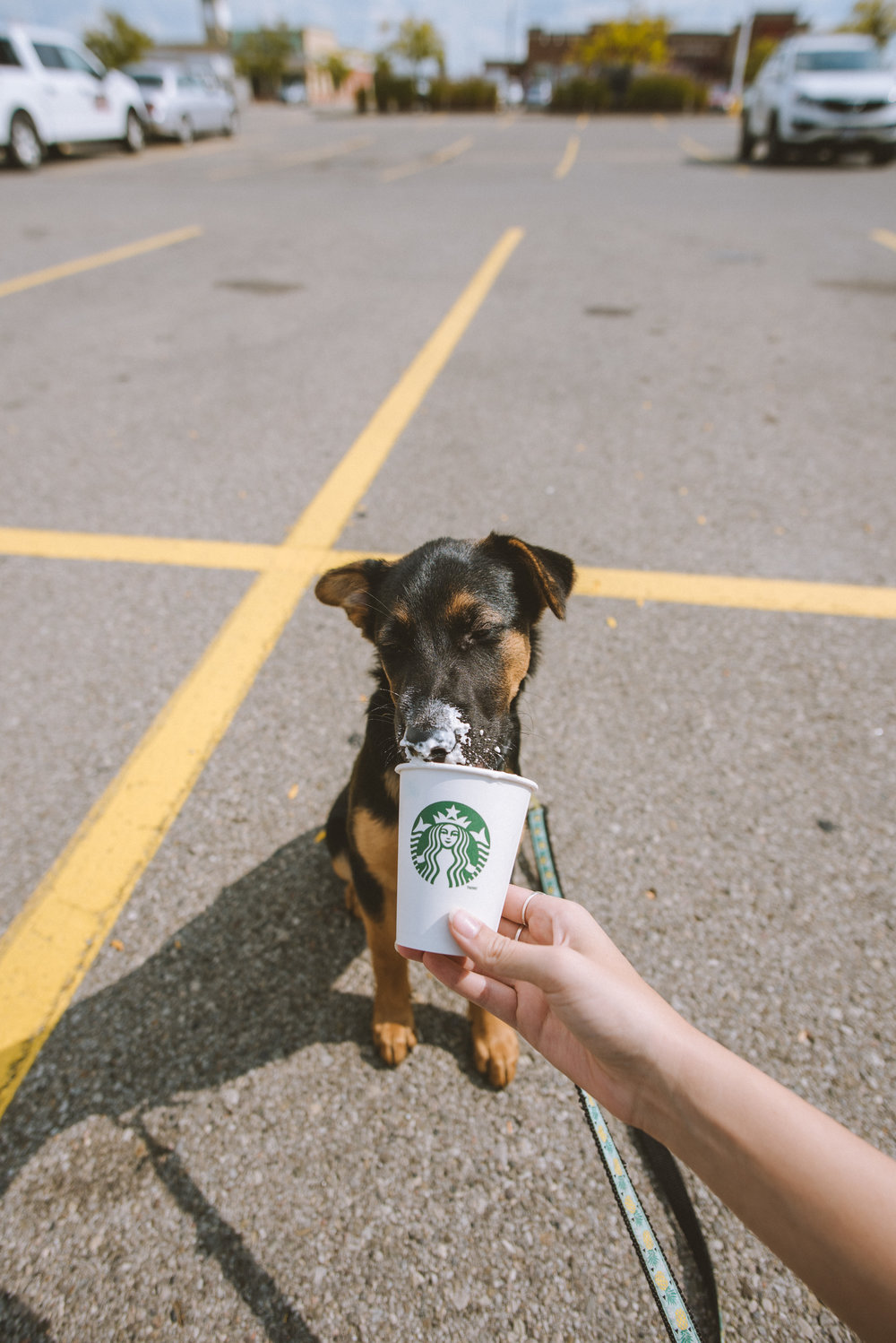 first puppaccino