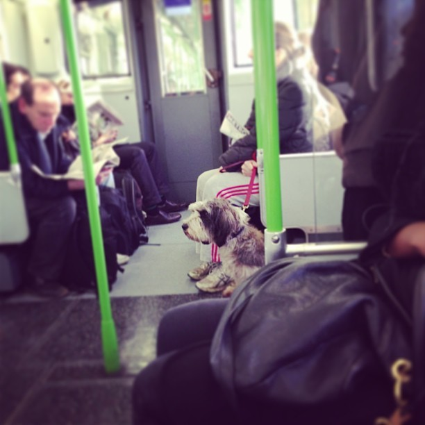 The cutest pooch just got on my tube! @dogsontrains @jmgcreative does anyone know what breed it is?