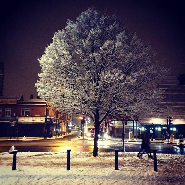 Snowy tree in Whitechapel.
