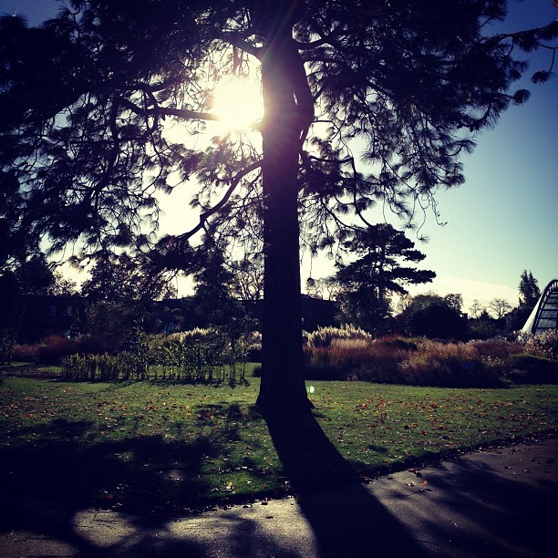 Good morning @kewgardens! So so beautiful here this morning with the sunlight streaming through the trees!