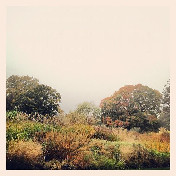 The Grass Garden @kewgardens. Awash with stunning autumn colours!
