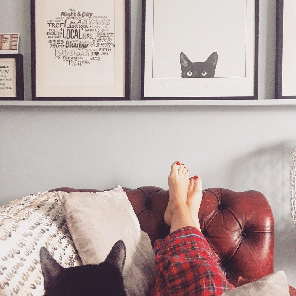 Mindfulness Cats