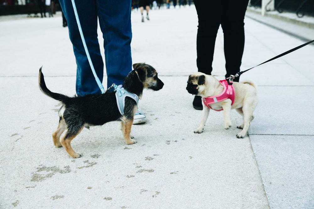 Puppy Love in Retiro Park, Madrid