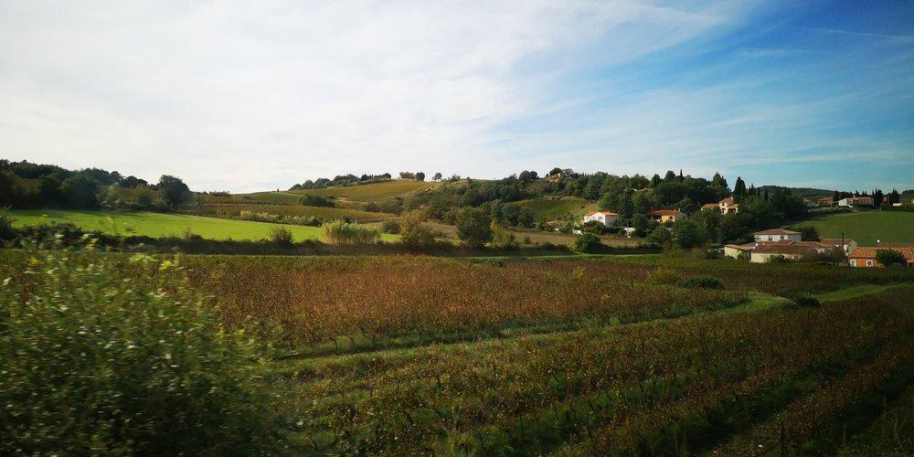 Paul Mas Wines Languedoc France