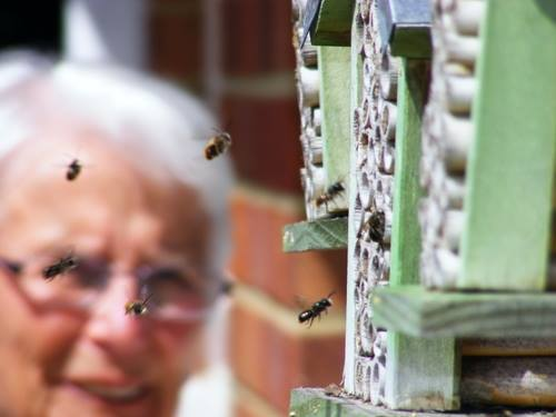 Joyce with her beloved solitary bees