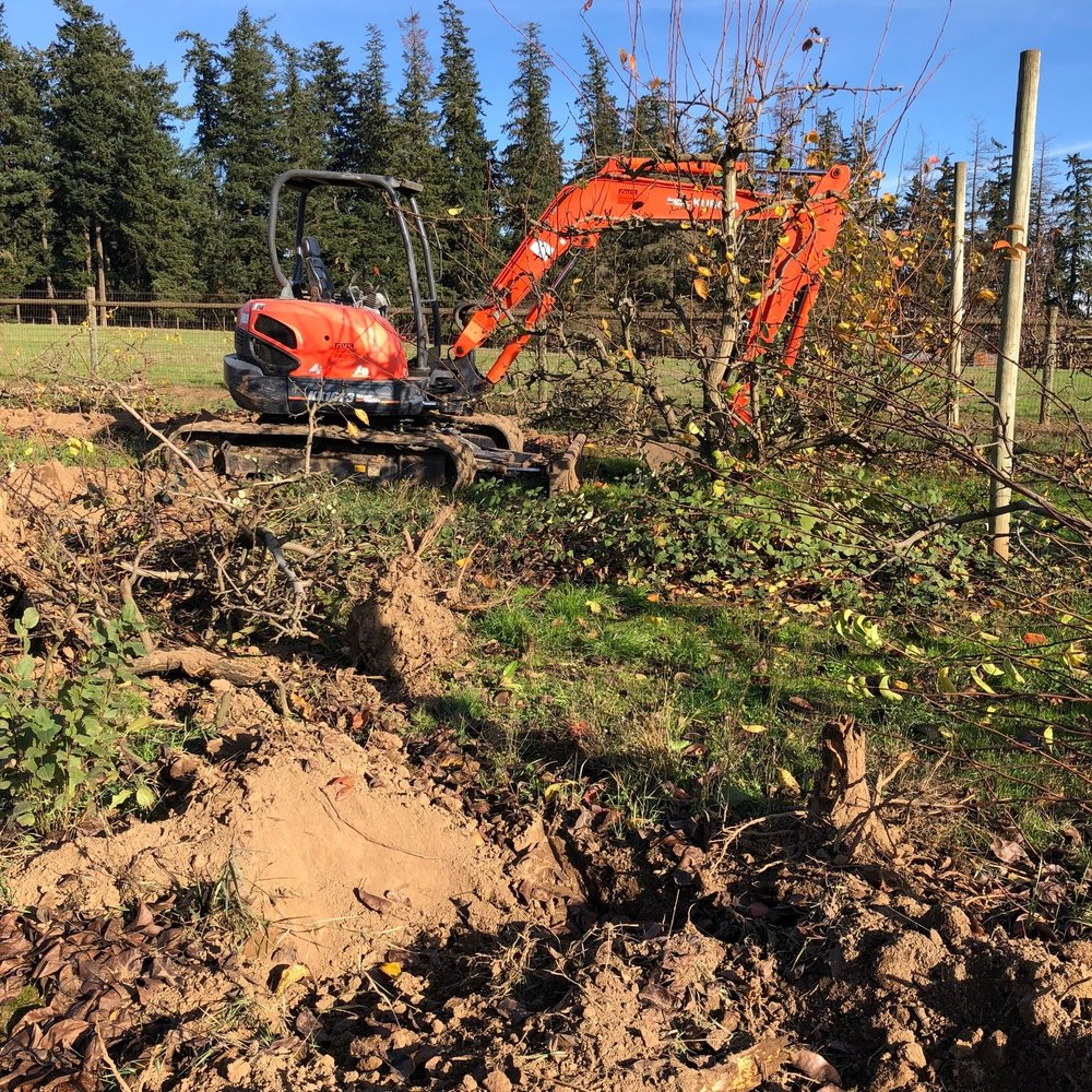 Our handy excavator making quick work of our old pear orchard.