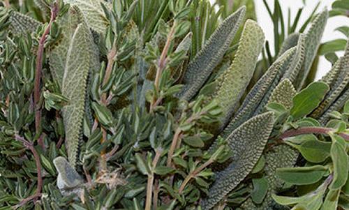 Neapolitan Herb<br>Balsamic