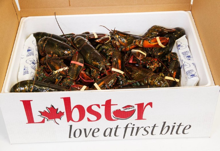 tangier-lobster-lobster-packed-in-styro-box-768x525.jpg