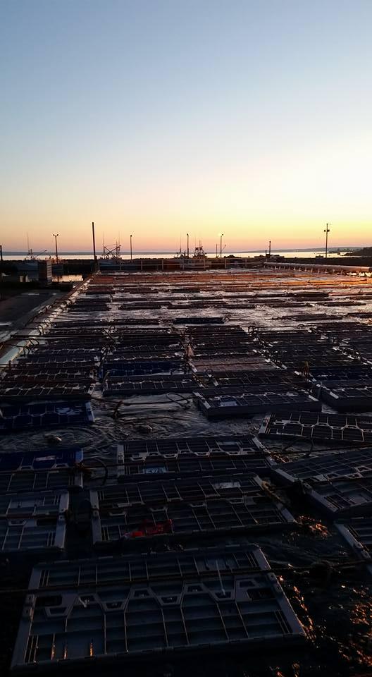 sunset traps.jpg