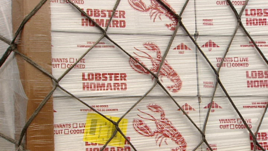 Nova Scotia lobster is often sent to places such as Boston and New York to get shipped overseas.
