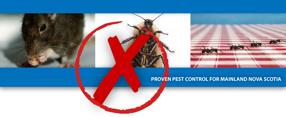 ace pest banner.png