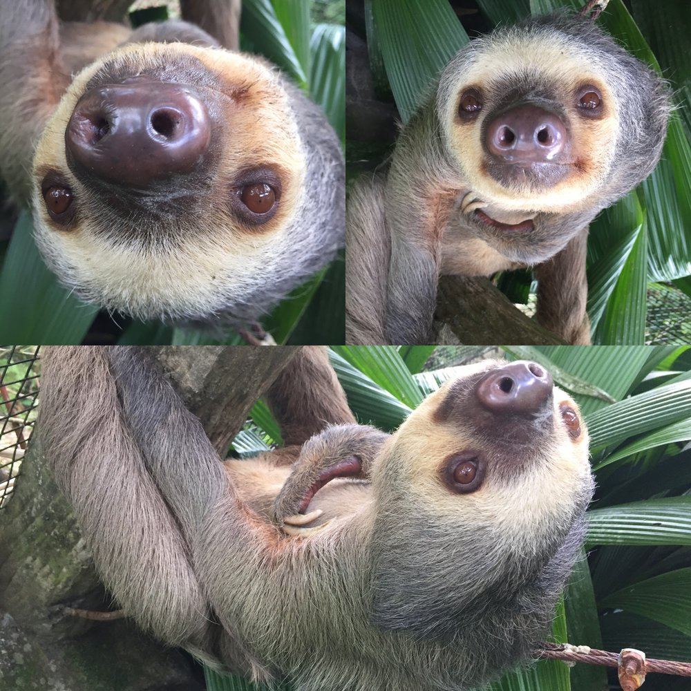 I promise to respond to your inquiry faster than a Costa Rican sloth.