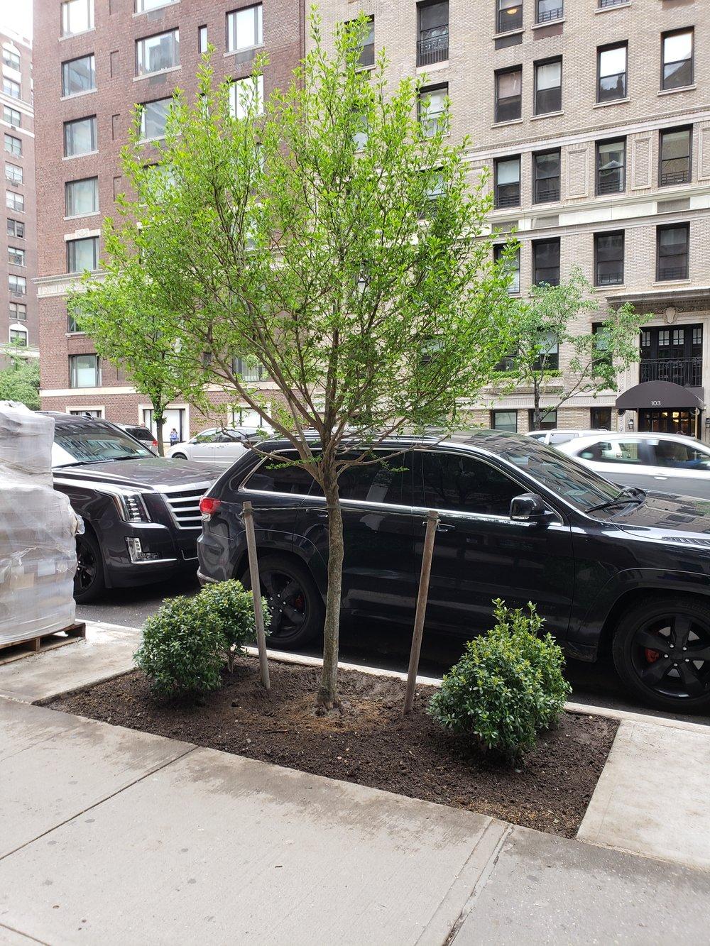 E 86th trees plants 2 5 16 18.jpg