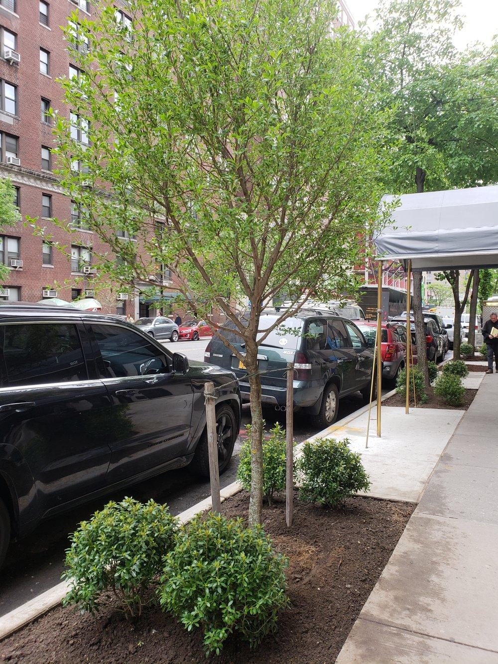 E 86th trees plants 1 5 16 18.jpg