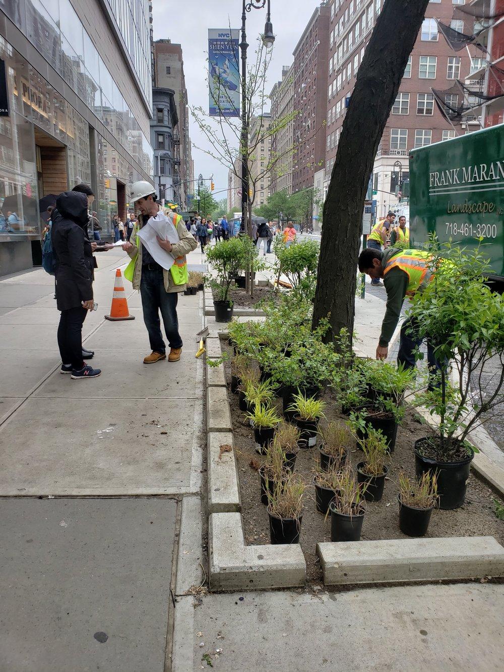 E 86th trees plants 3.jpg