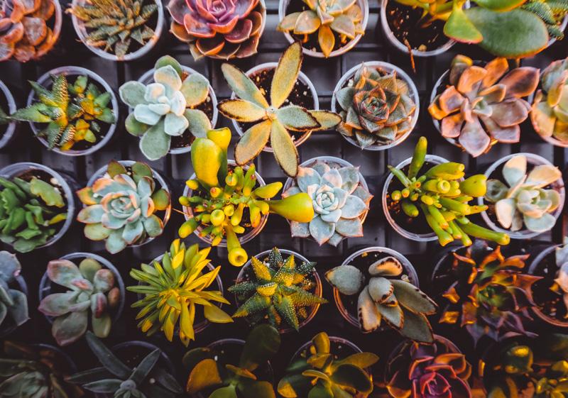 succulents-langdon-hall.jpg