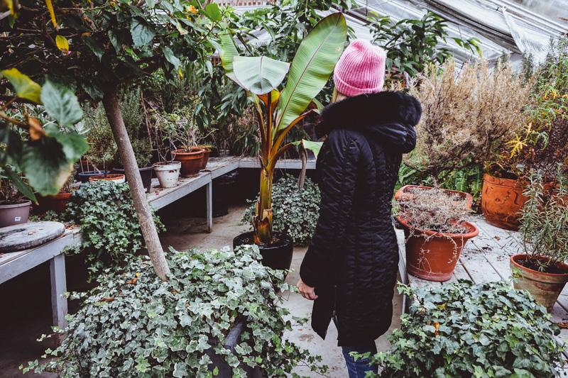 langdon-greenhouse.jpg