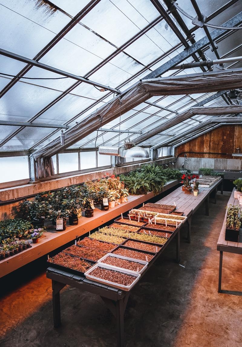 langdon-hall-greenhouse.jpg