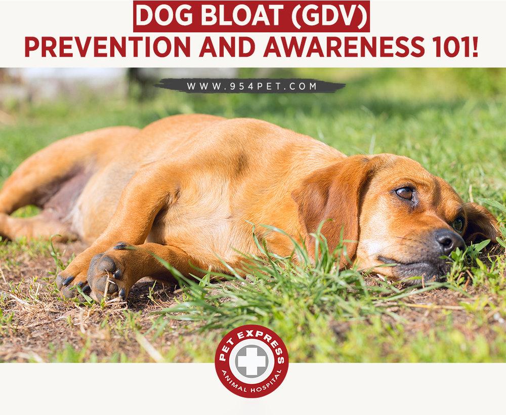 Dog Bloat (GDV) Prevention and Awareness 101!