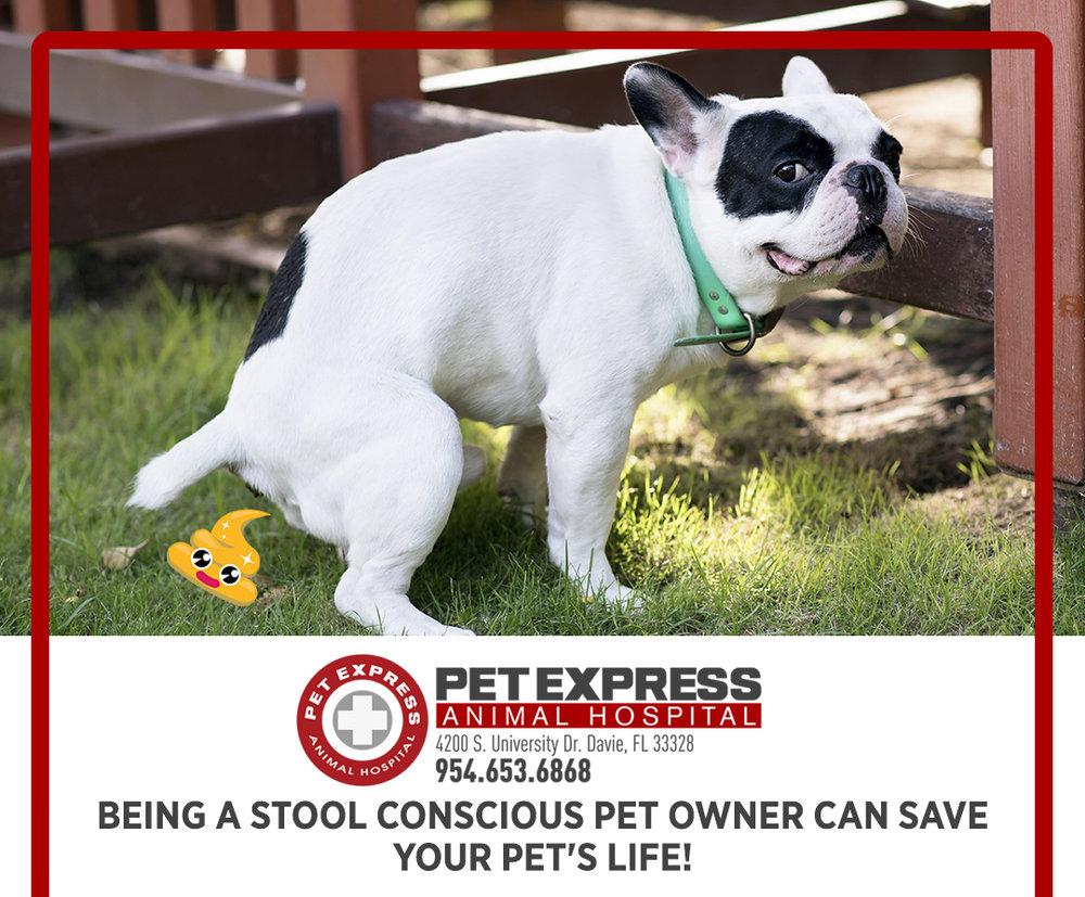 Understanding your pet's health through awareness and other methods.
