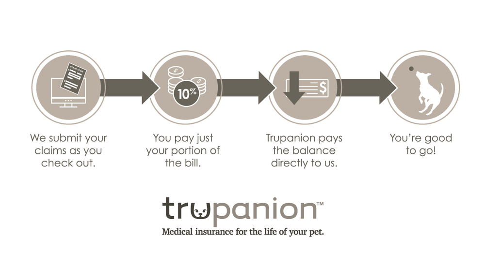 Trupanion insurance set up process.