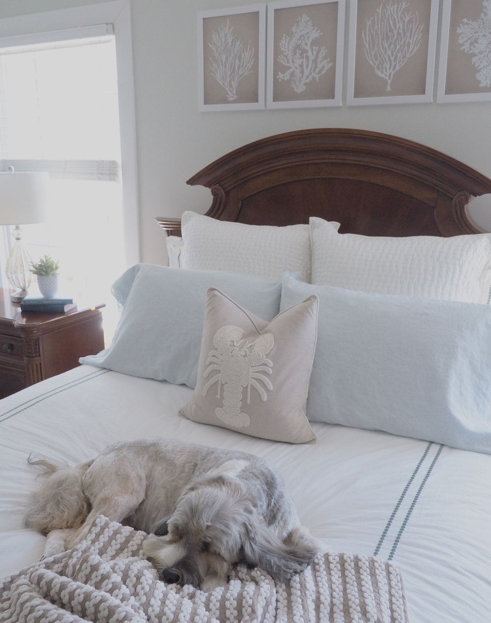 Harper approves of the bedroom decor changes! Really though, he loves the duvet!! Windows are next!