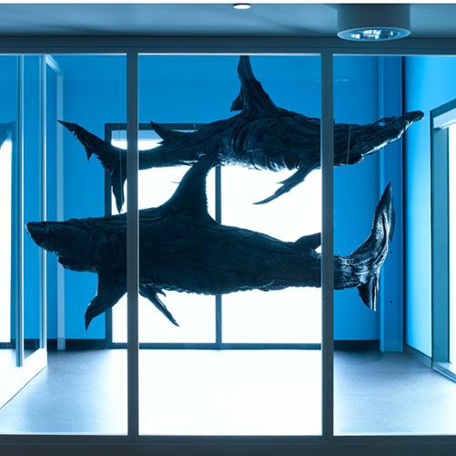 5Ques_sharks.jpg