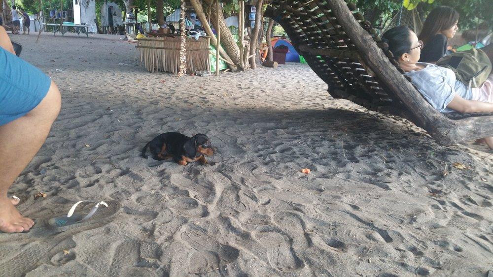 island-dog.jpg