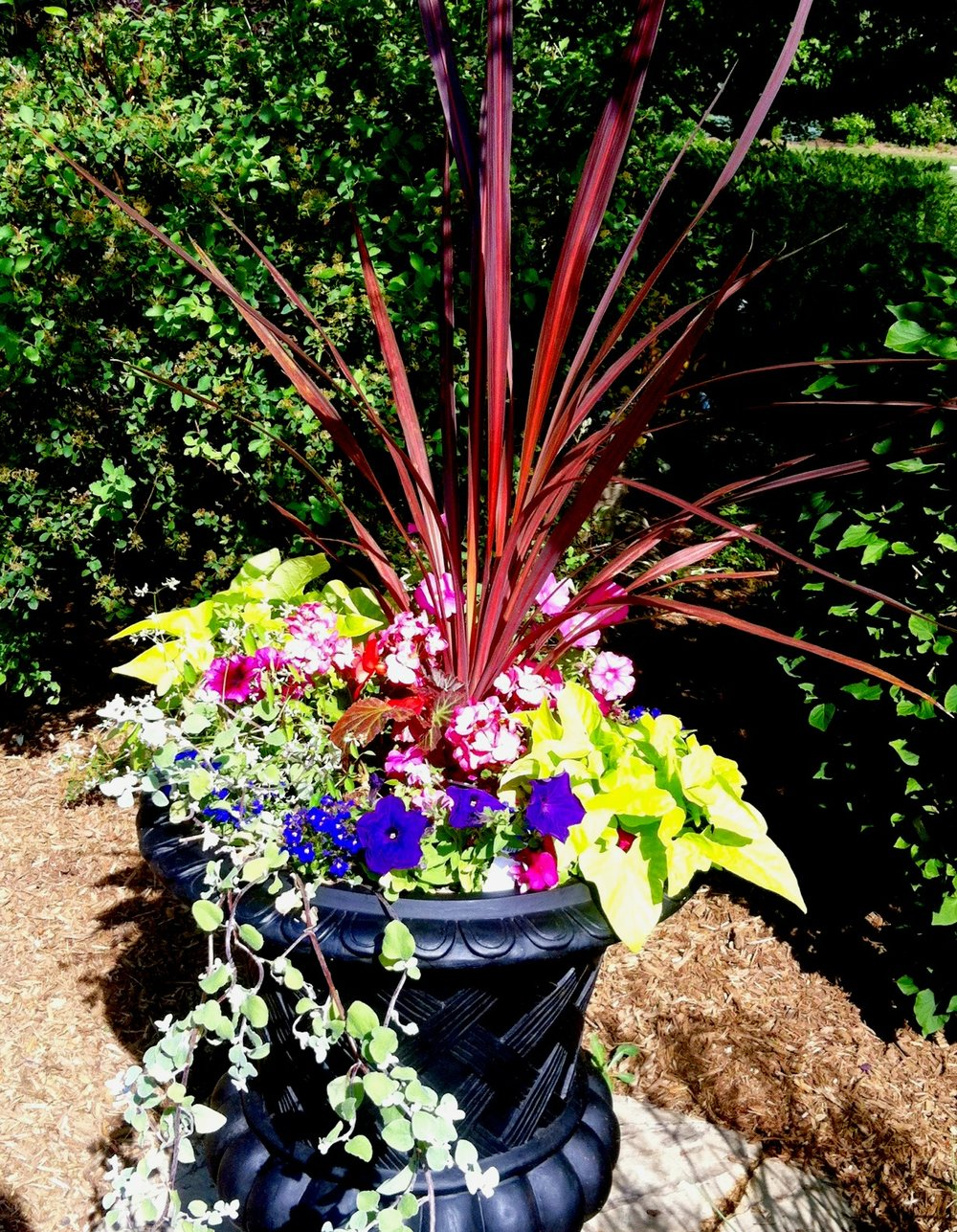 Red Cordyline steals the show in the center of this urn