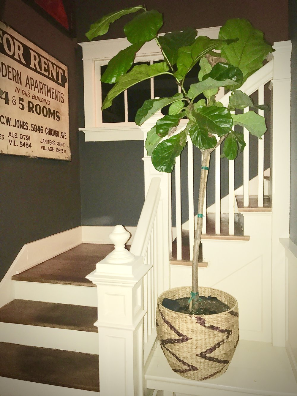 Fiddle leaf fig love!  www.cardiocoffeeandkale.com