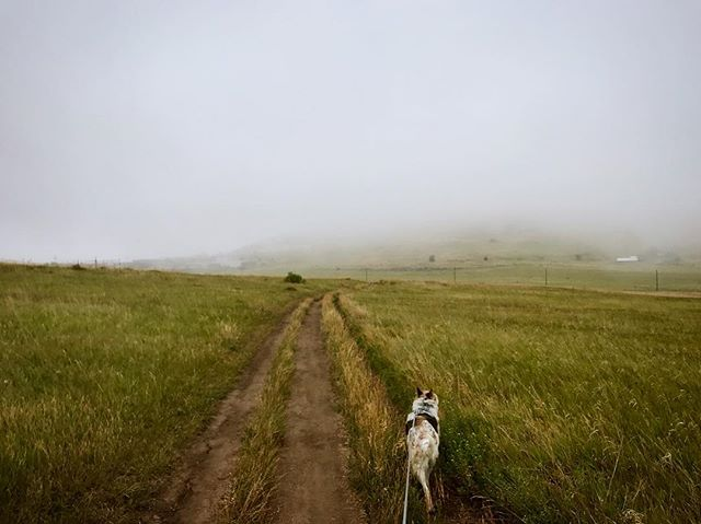 Had quite the week-met my newborn niece, saw my best friend get married, and got some time to take in the grandeur. Love colorado always . . . . . #colorado #denver #photography #dogsofinstagram #fog #mood #nature #landscape #landscapephotography