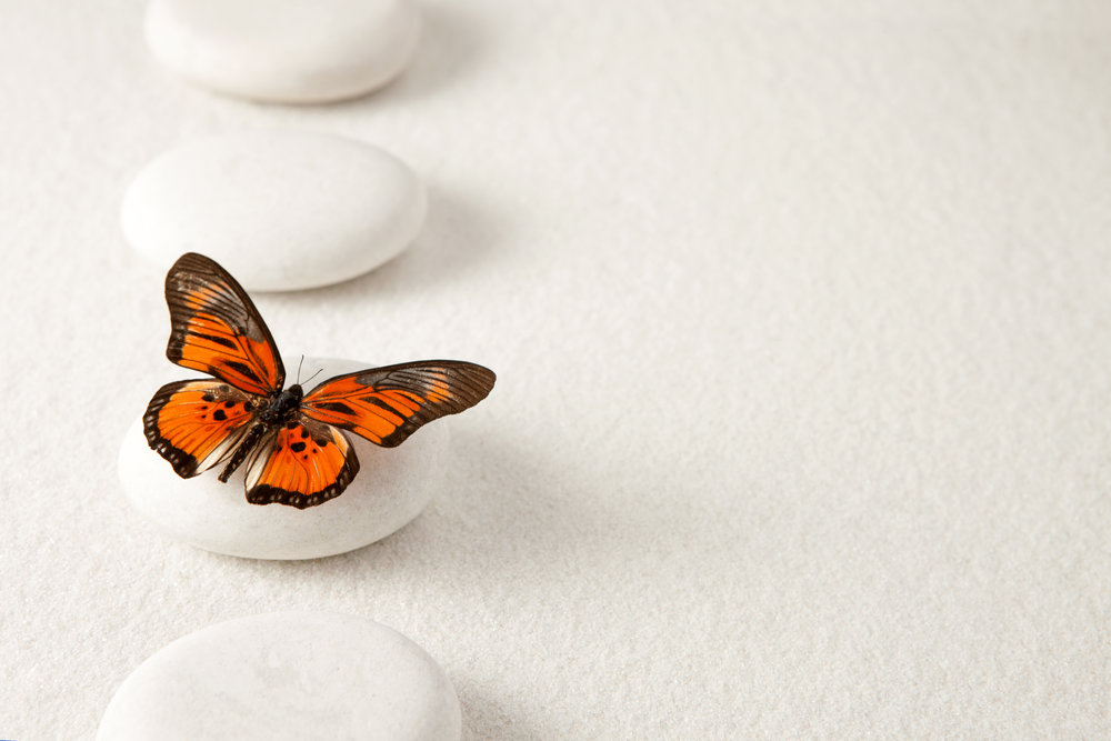 About Jodi Walsh Butterfly