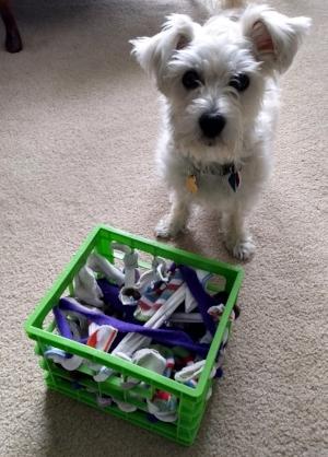 Blog wag worthy dog training dog diy snuffle puzzle positive reinforcement dog brain games solutioingenieria Gallery