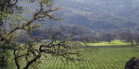 Vineyard & Wine If you own or are looking for wine-country property, we can offer some very specific expertise. As the Owner of a 180 acre ranch located in Mendocino County, Ron Sutton is familiar with the requirements of a vineyard property. Bells Echo Ranch & Vineyard is situated in its own private valley along Feliz Creek and among the Pacific Coast Mountains. This is the heart of the acclaimed North Coast Mendocino Wine Region. The mature vineyard consists of 50 acres of Bordeaux varietals; Cabernet Sauvignon, Merlot, Petite Verdot, Malbec, and Syrah. Ron can offer his insight from his experience of working closely with the winemaker: from pruning, watering, shoot, leaf and cluster management, all the way to harvest. The most exciting happening of 2007 was to see the release of Bells Echo Vineyard designated wines, so if that is your goal, Ron has experience with that as well. Call to set up an appointment for us to look at your property!