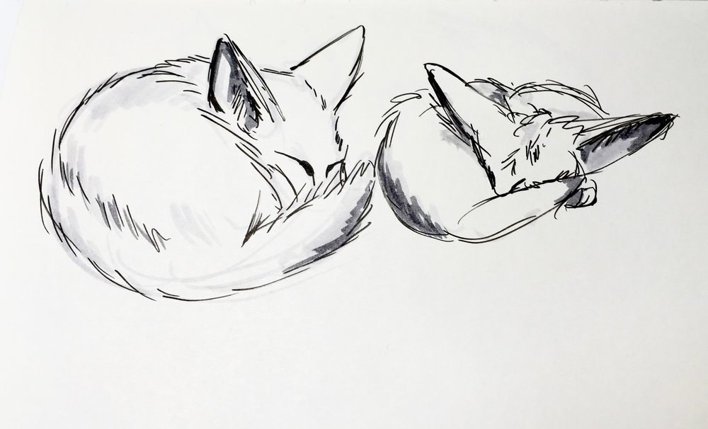 Fennec_Foxes.jpg