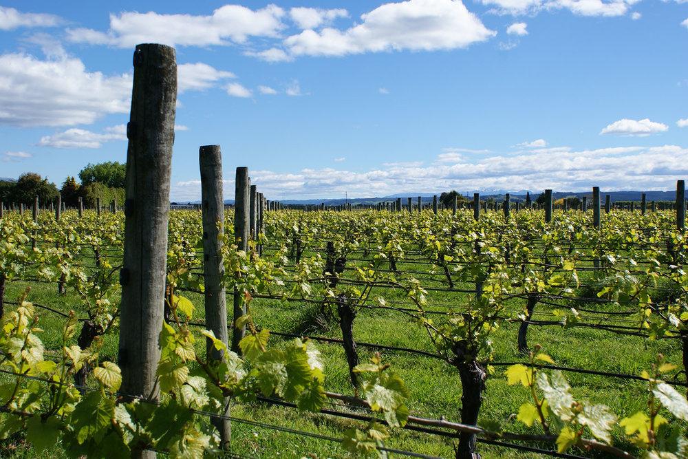 Vineyard Spring_1500.jpg