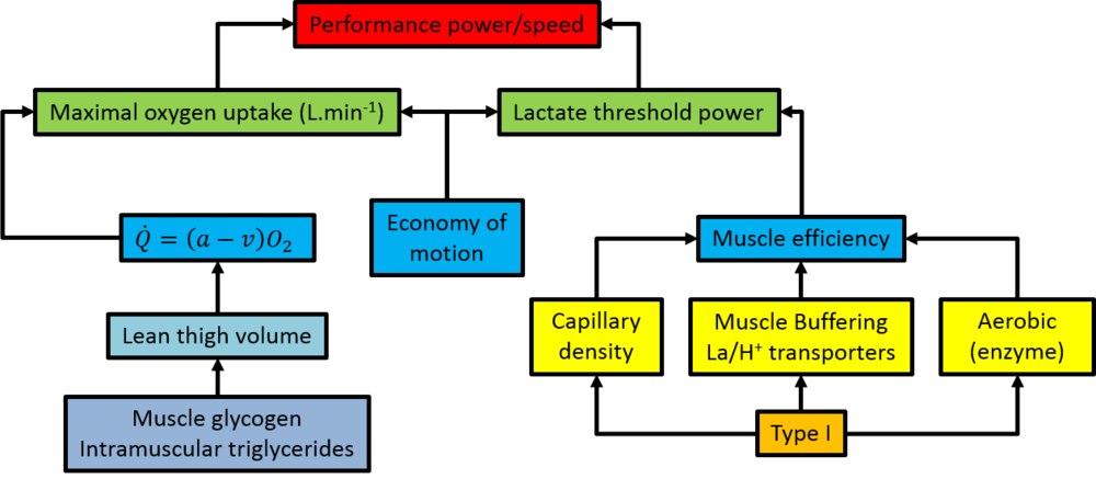 The factors affecting intermediate-distance performance. Hargreaves, M. & Hawley, J. A. Physiological bases of sports performance.  (McGraw-Hill Australia, 2003).