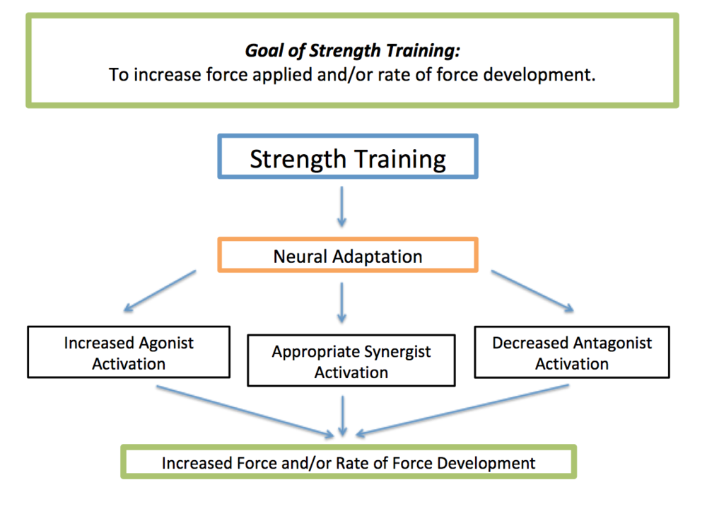 Image 1 - Summary of how strength training develops greater neuromuscular pathways.