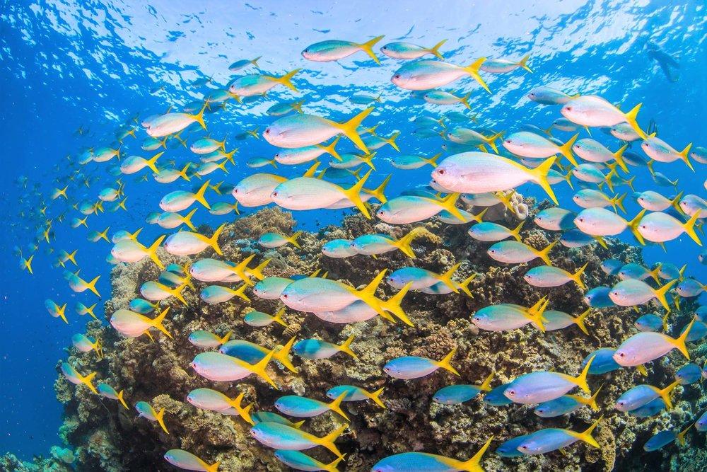 reef4 2.jpg
